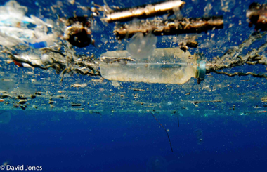 Plastic enzyme pollution in oceans1
