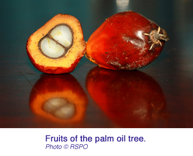 palm oil iceland RSPO fruits copy