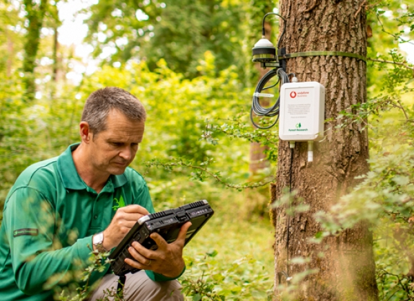 Internet of things placed on English trees to see how cope with climate change