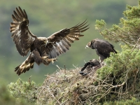 New rewilding network aims to boost nature on 300,000 acres